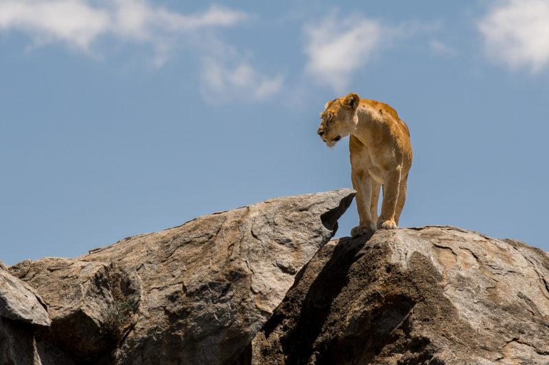 Tanzânia: Santuário de Vida Selvagem, João Godinho