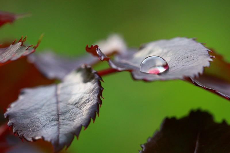 Fragmentos da Natureza, Carla Lopes