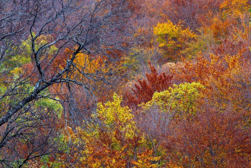 O Outono na Estrela, Chão de Celorico, Miguel Serra