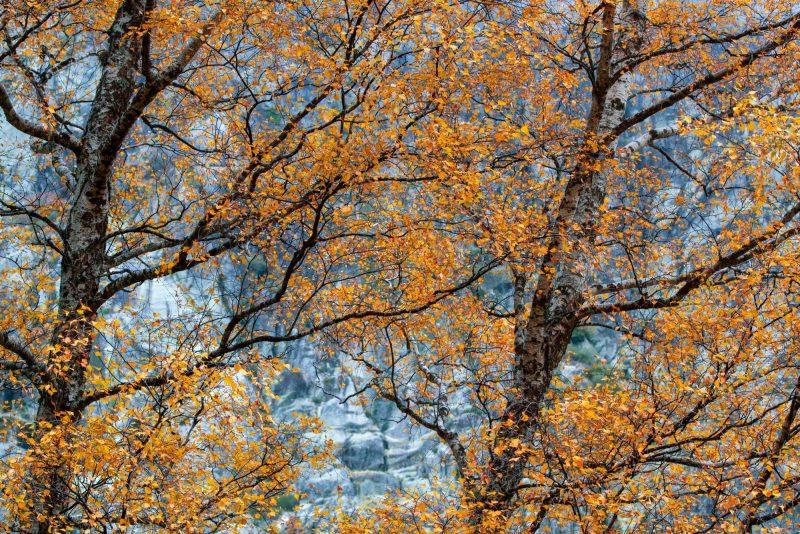 O Outono na Estrela, Covão d'Ametade, Miguel Serra