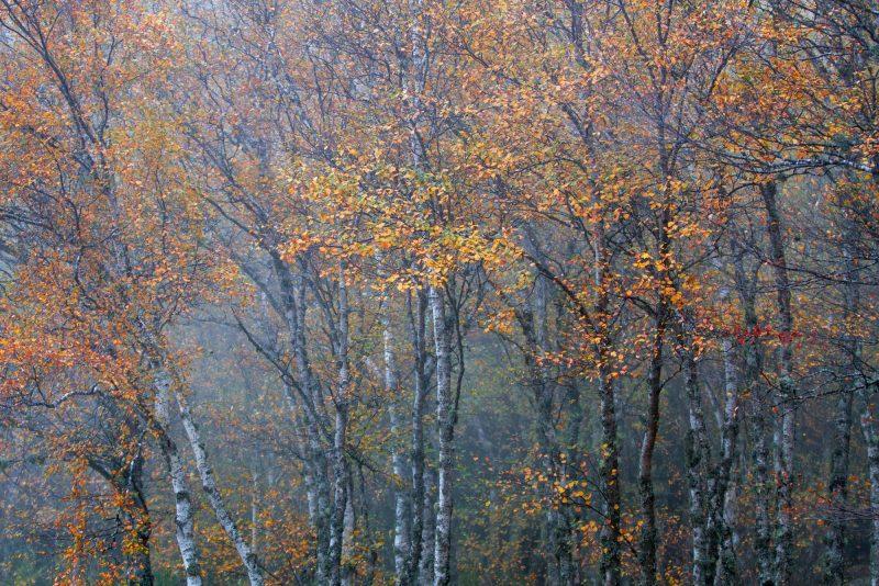 O Outono na Estrela, Fonte da Jonja, Miguel Serra