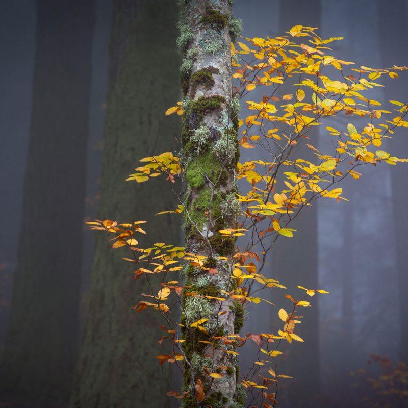 O Outono na Estrela, Faias de São Lourenço, Miguel Serra