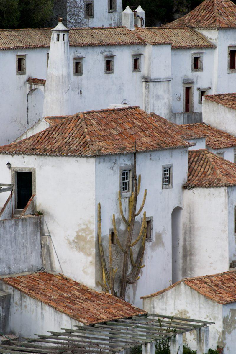 Arrábida: Aqui tão perto!, José Luís Proença