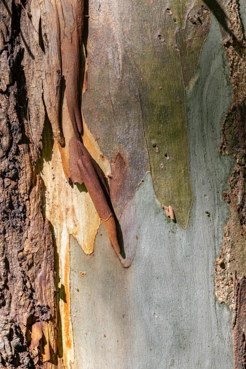 No Universo das Árvores, Há o Mundo Real, Maria Botica